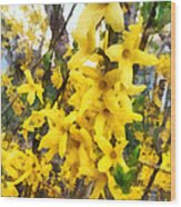 Spring - Sprig Of Forsythia Wood Print