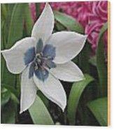 Spring Star Wood Print