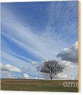 Spring Sunshine Epsom Downs Surrey Wood Print