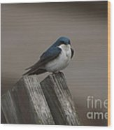 Spring Swallow Wood Print