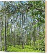 Spring Swamp Wood Print