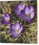 Spring Wood Print by Sylvia  Niklasson