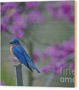 Spring Time Blue Bird Wood Print
