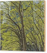 Spring Time In Bryant Park New York Wood Print by Angela A Stanton