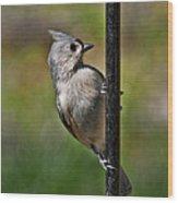 Spring Titmouse 1 Wood Print
