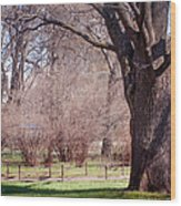 Spring Tree At Soft Rosy Spring In The Garden Wood Print by Jenny Rainbow