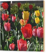 Spring Tulip Garden Wood Print