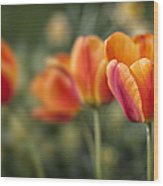 Spring Tulips Wood Print by Adam Romanowicz