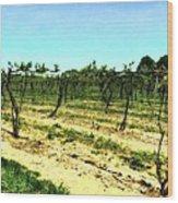 Spring Vineyard Ll Wood Print