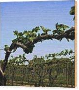 Spring Vineyard Wood Print