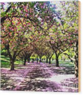 Spring Walkway Lined By Blooming Cherry Trees Wood Print