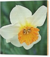 Spring White Wood Print by Cathie Tyler