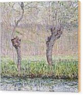 Spring Willows Wood Print