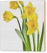Spring Yellow Daffodils Wood Print