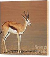 Springbok On Sandy Desert Plains Wood Print