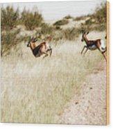 Springbok Running Wood Print