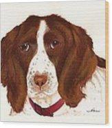 Springer Spaniel  Wood Print