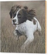 Springer Spaniel Painting Wood Print