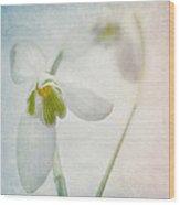 Springflower Wood Print