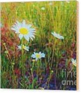 Springing Daisy's Wood Print