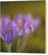 Springs Delicate Richness Wood Print by Mike Reid