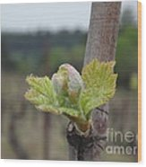 Spring In The Vineyard Wood Print