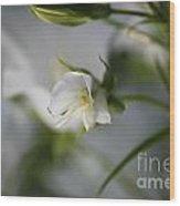 Spring's Late Bloom Wood Print