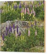 Springtime At Lake Tekapo Wood Print