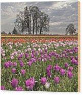 Springtime At Tulip Farm Wood Print