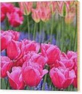 Springtime Blooms In Holland Wood Print