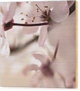 Springtime Blossom Wood Print