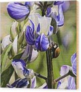 Springtime Bluebonnet Wood Print