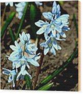 Springtime Blues Wood Print
