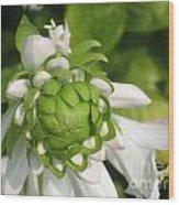 Springtime Bud Wood Print