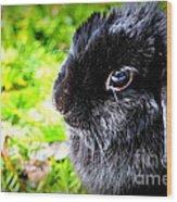 Springtime Bunny Wood Print