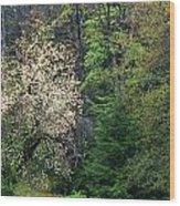 Springtime Forest Blossoms  Wood Print