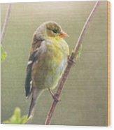 Springtime Goldfinch Wood Print