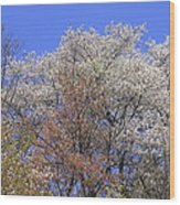 Springtime In Great Balsam Mountains Wood Print