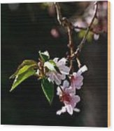 Springtime In Napa Ca Wood Print