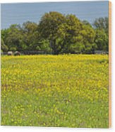 Springtime In Texas 3 Wood Print