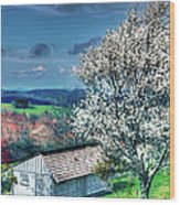 Springtime In The Blue Ridge Mountains II Wood Print by Dan Carmichael