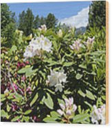 Springtime In The Cascades Wood Print