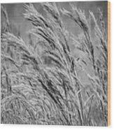 Springtime In The Field - Bw Wood Print