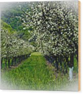 Springtime In The Orchard Wood Print by Bill Gallagher