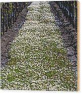 Springtime In The Vineyards Wood Print