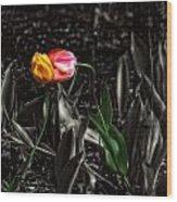 Springtime Kiss Wood Print by Dan Quam