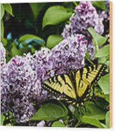 Springtime Lilac And Butterfly Wood Print