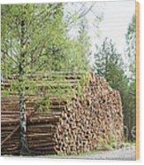 Springtime Logs Wood Print