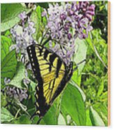Springtime Moments- The Butterfly And The Lilac  Wood Print