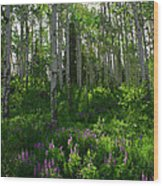 Springtime On The Grand Mesa Wood Print